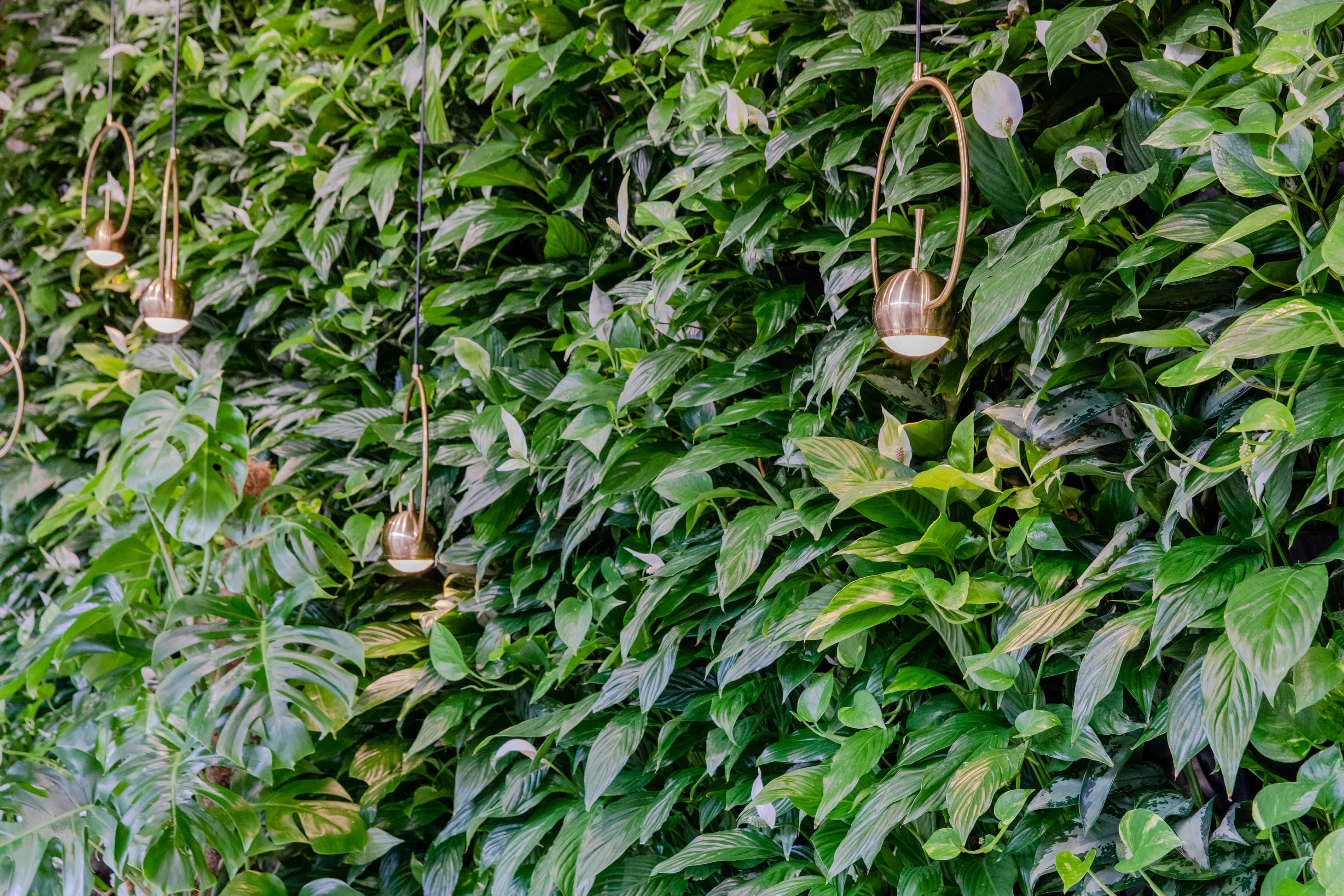 Вертикальное озеленение в офисе