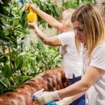 Обслуживание растений в офисах